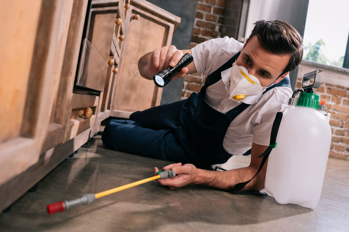 Reliable and Effective Pest Control Buffalo NY