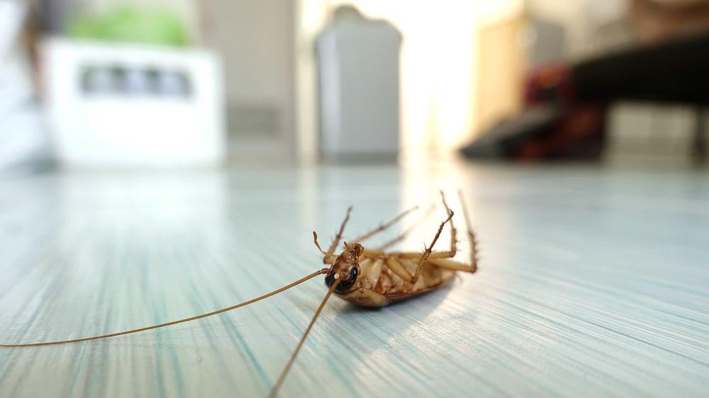 Pest Control Tonawanda NY