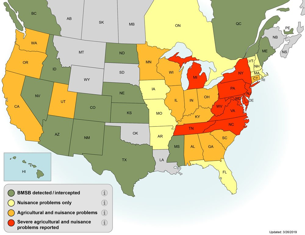 Map of the Unioted States showing Stink Bug spread